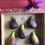 FF2 1st Jim Wisnia - brown turkey fig